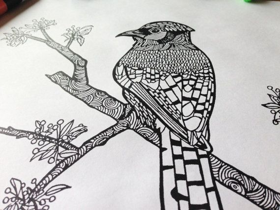 blue jay printable pdf coloring page from the birch and