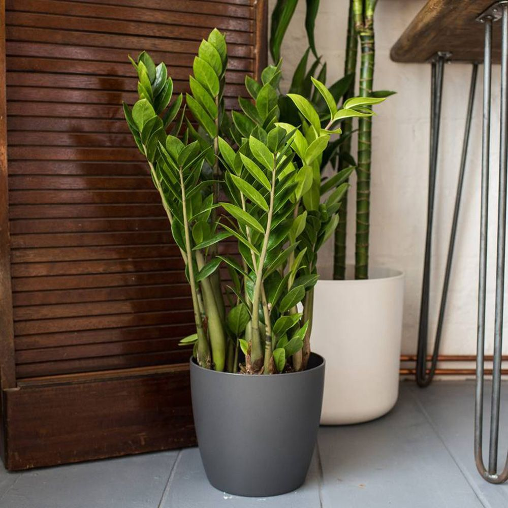 Meet the UNKILLABLE houseplant that can survive anywhere ...