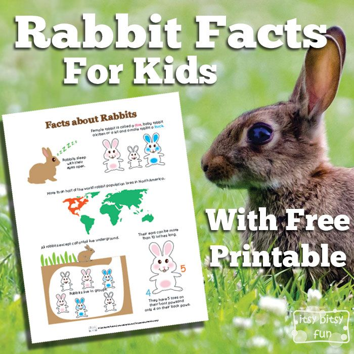 Baby Rabbits: a childrens book with rabbit facts about pet rabbits