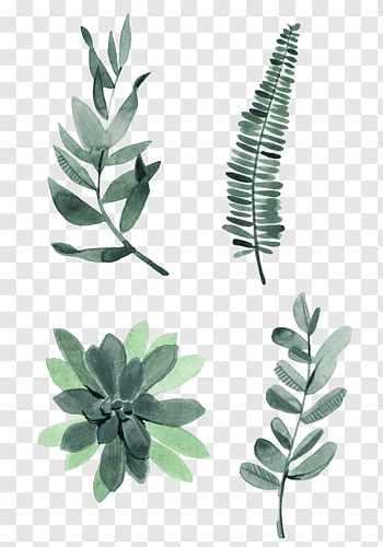 Watercolor Painting Drawing Plant Illustration Watercolor Leaves Four Assorted Green Leaves Free Png Plant Drawing Plant Illustration Leaf Illustration