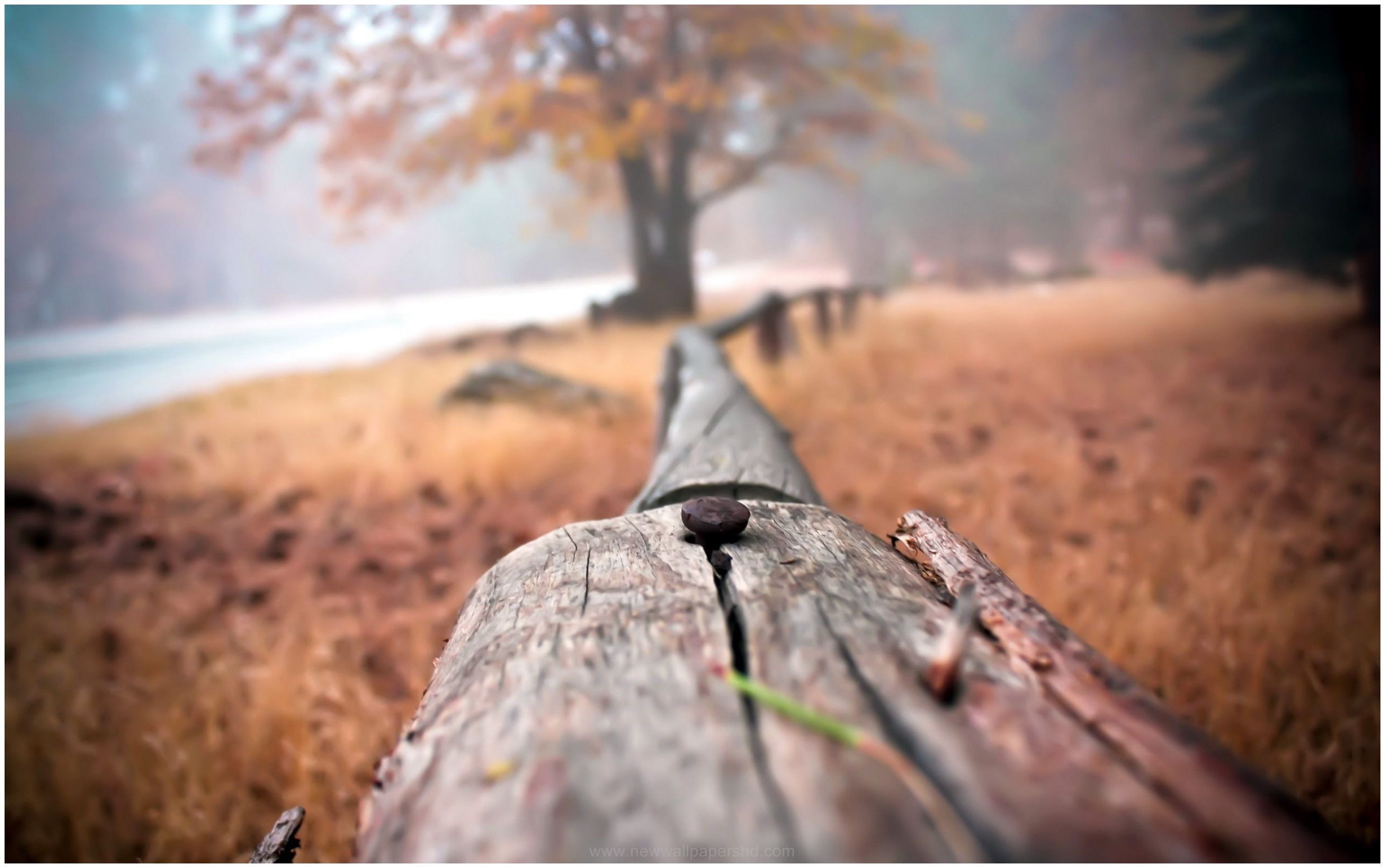 Forest Landscape Close Up Photography Hd Wallpaper Close Up Photography Forest Landscape Nature Photography