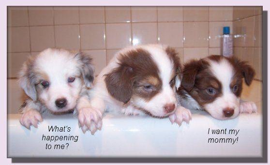 Bath puppies