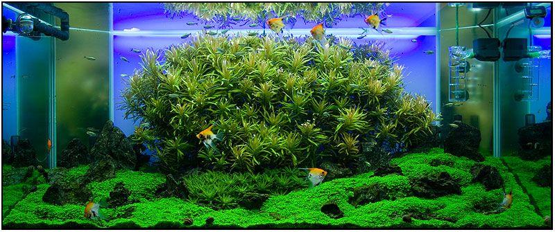 acuario plantado buscar con google