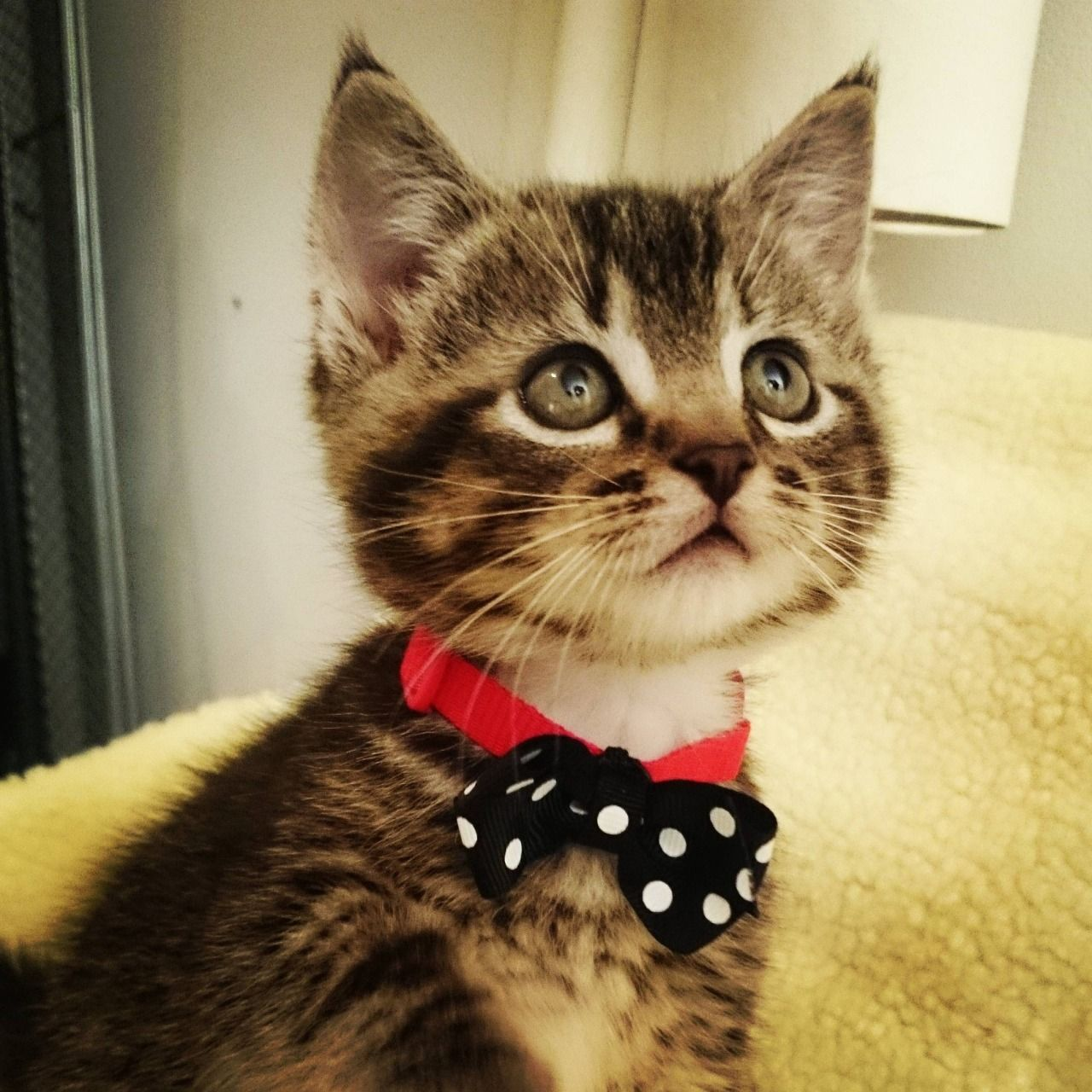 awwww! Cute! — Hey Reddit, meet Link. He likes to keep it