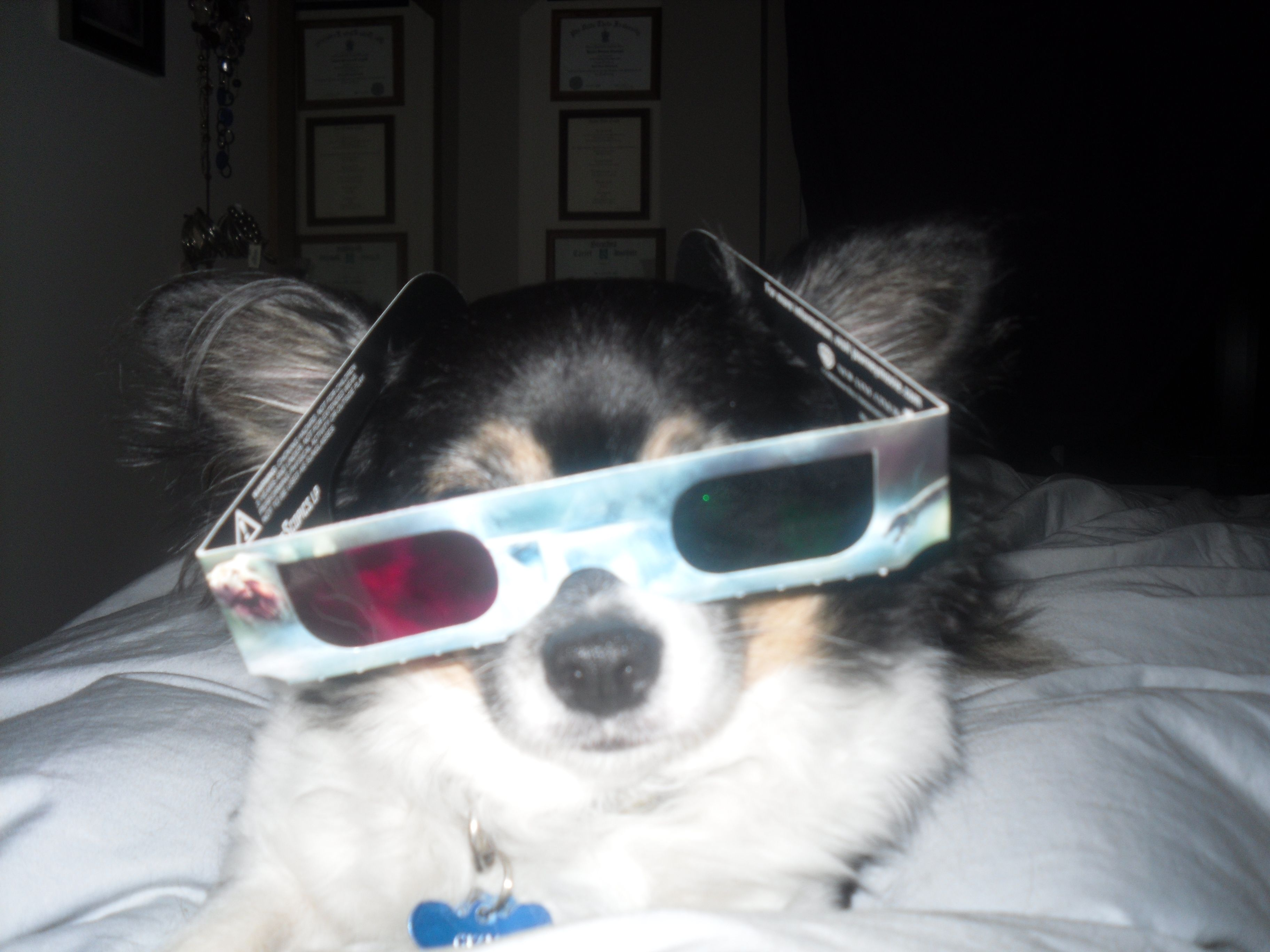 Gizzy watching a 3d movie with me