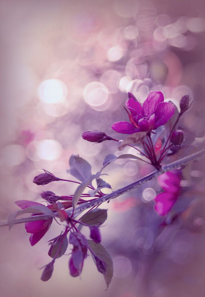 Spring In Pink By Marta Syslo Vanadis On 500px Cherry Blossom Wallpaper Flower Pictures Pink Nature