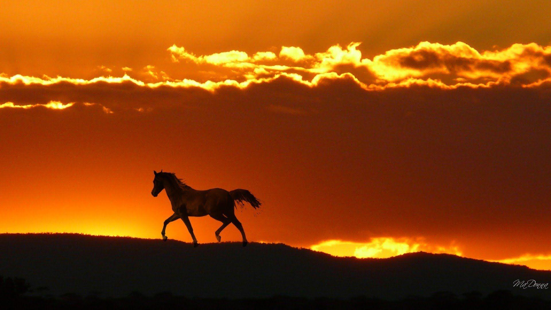 Horse In Horizon Pasture Hills Fire Sky Sunrise Sunset Clouds Desktop Bakcgrounds