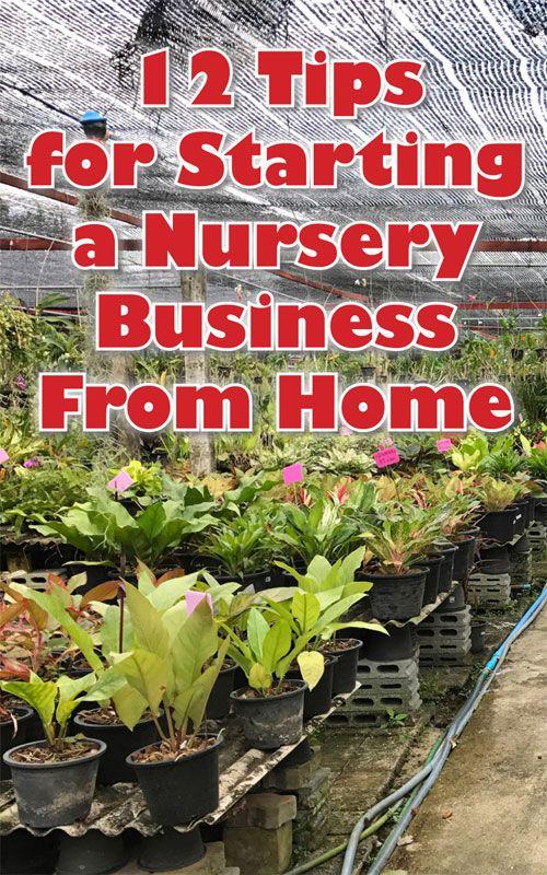 Starting a Nursery Business | Garden nursery, Small garden ...