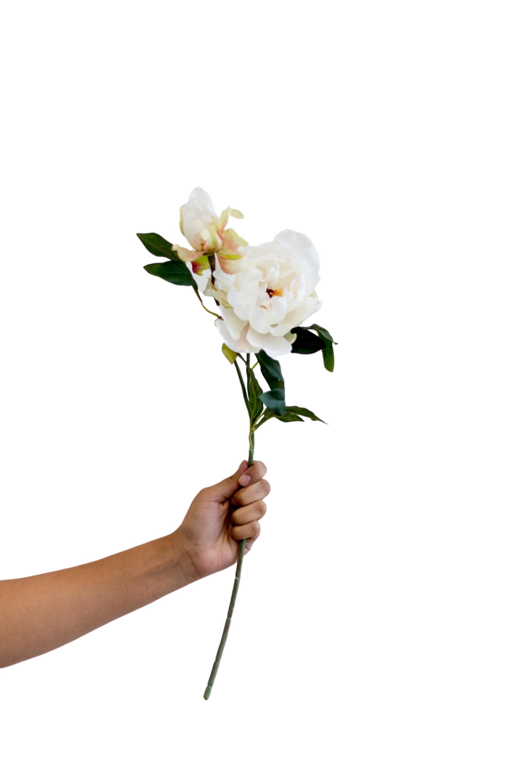 Peony Spray In Cream In 2020 Peonies Spray Holding Flowers