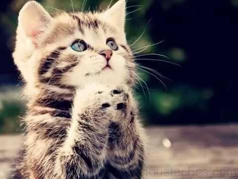Image de chatons trop mignons chats chaton chat et - Image des mignon ...