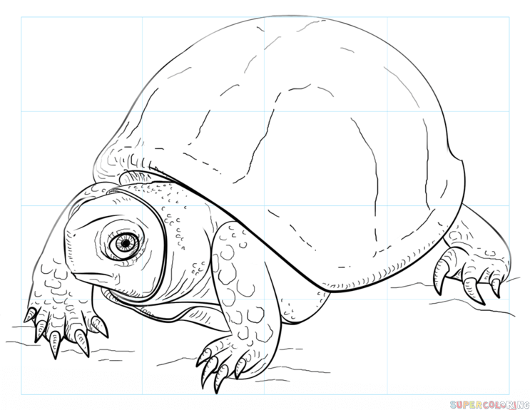 How to draw an Ornate Box Turtle step by step. Drawing tutorials for kids and beginners.