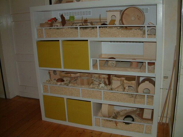 Ikea expedit ideen  Ikea Expedit zu Hamstergehege umgebaut http://www.das-hamsterforum ...