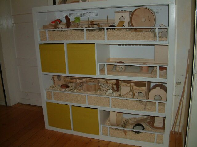 Ikea Expedit Zu Hamstergehege Umgebaut Http Www Das Hamsterforum De Index Php Page Thread Threadid 165401 Hamster Gehege Hamster Meerschweinchen Gehege