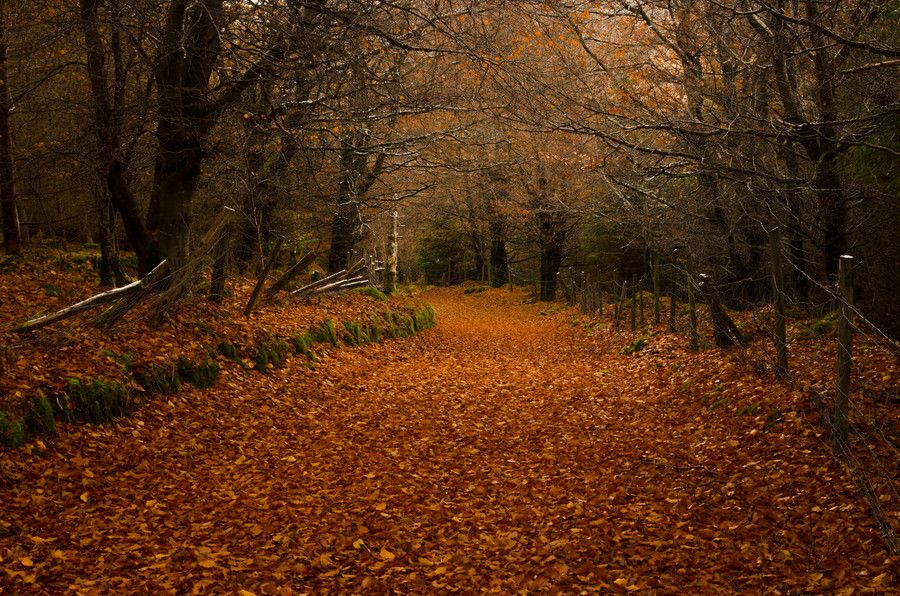 Autumn in Ireland by Greg Sinclair on 500px