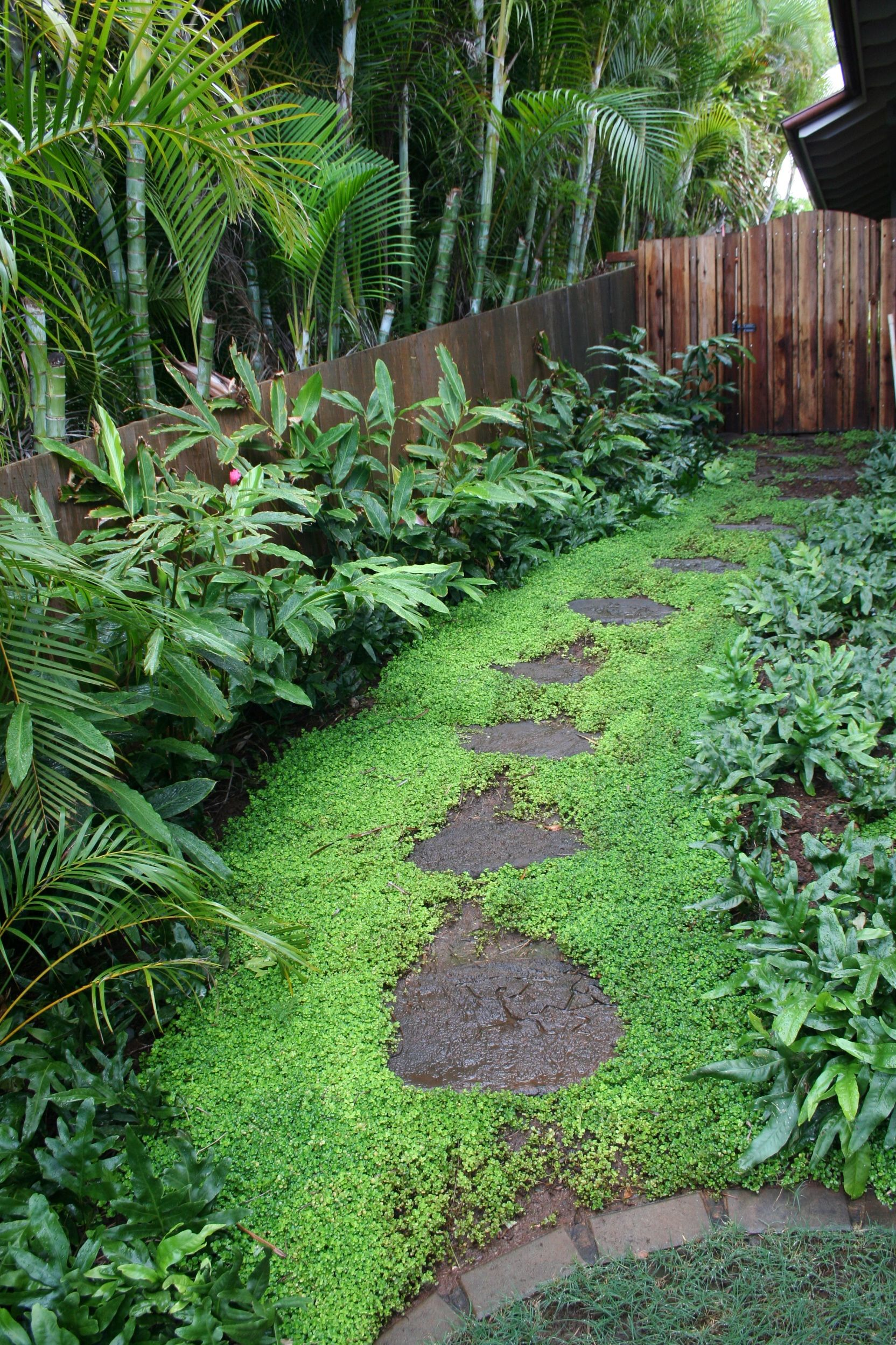 Hawaiian Landscaping - Google Search
