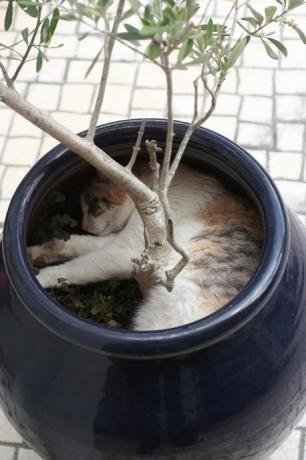 A kittyplant