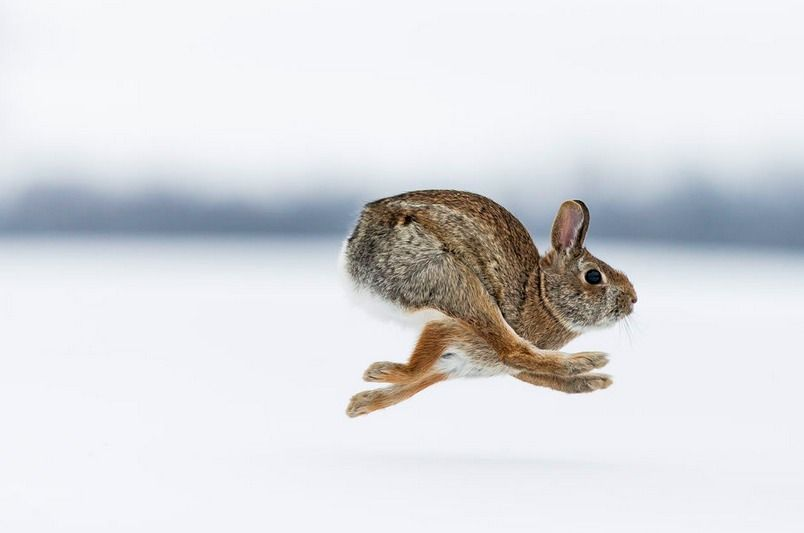 """Rabbit Run"" by Justin Russo Photography. °"
