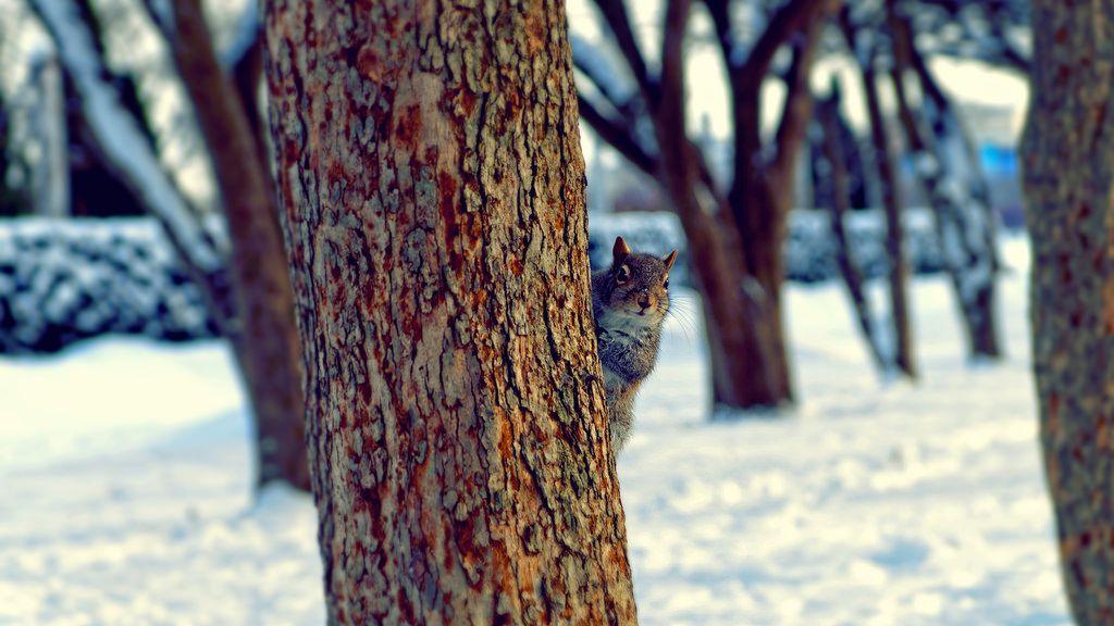 Squirrel Friend | Flickr - Photo Sharing!