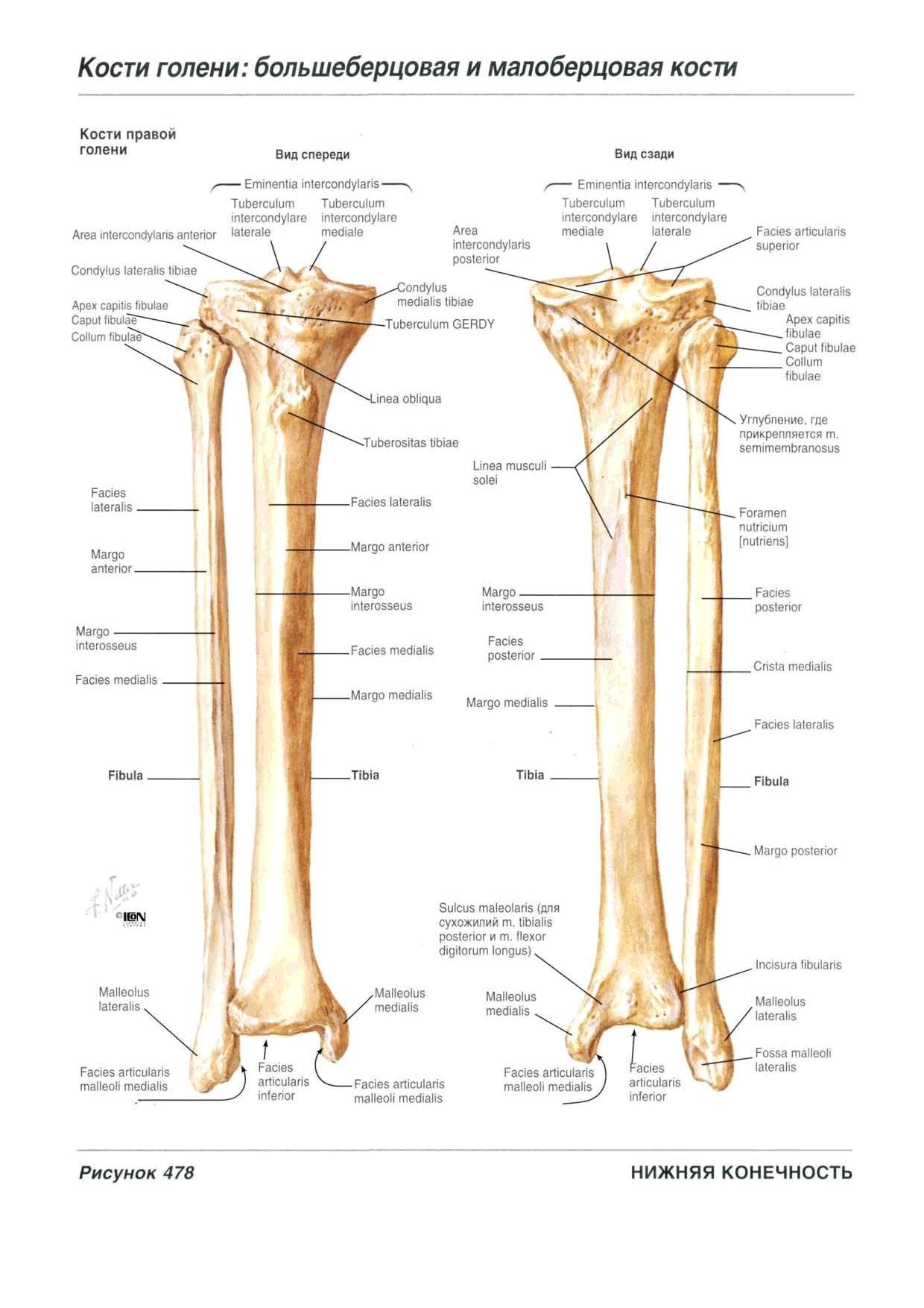 Wunderbar Anatomie Menschlichen Körperbild Ideen - Anatomie Ideen ...
