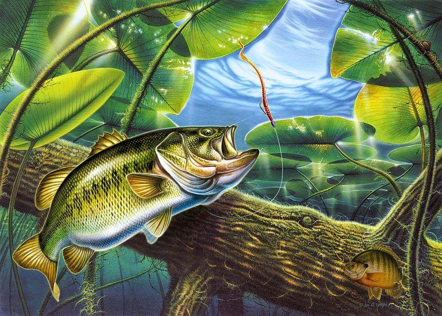 Bass Fishing Wallpaper Fish Art Fish Wallpaper Fish