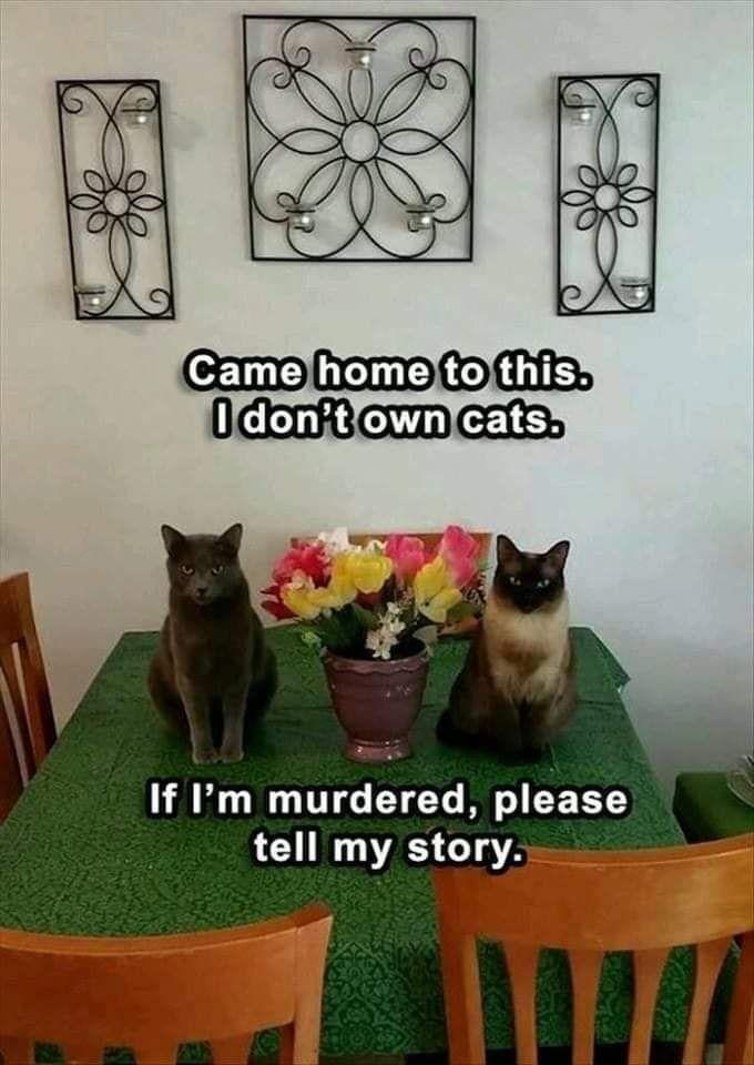 Hooman, Sie haben Glück, dass wir Sie gefunden haben ... Sie sind jetzt adoptiert ...   - HausTier -   #