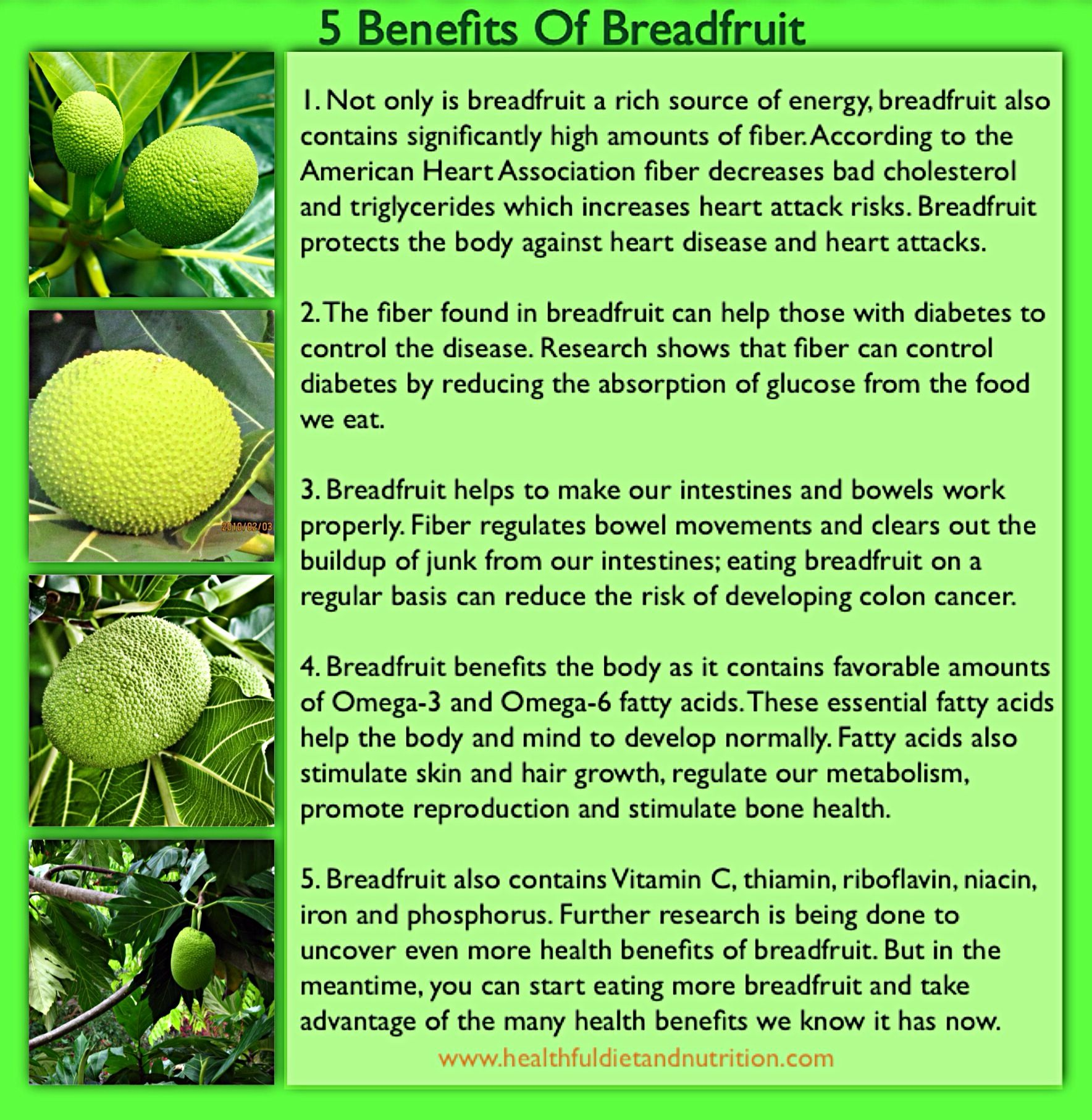 health benefits of breadfruit | healthful diet and nutrition