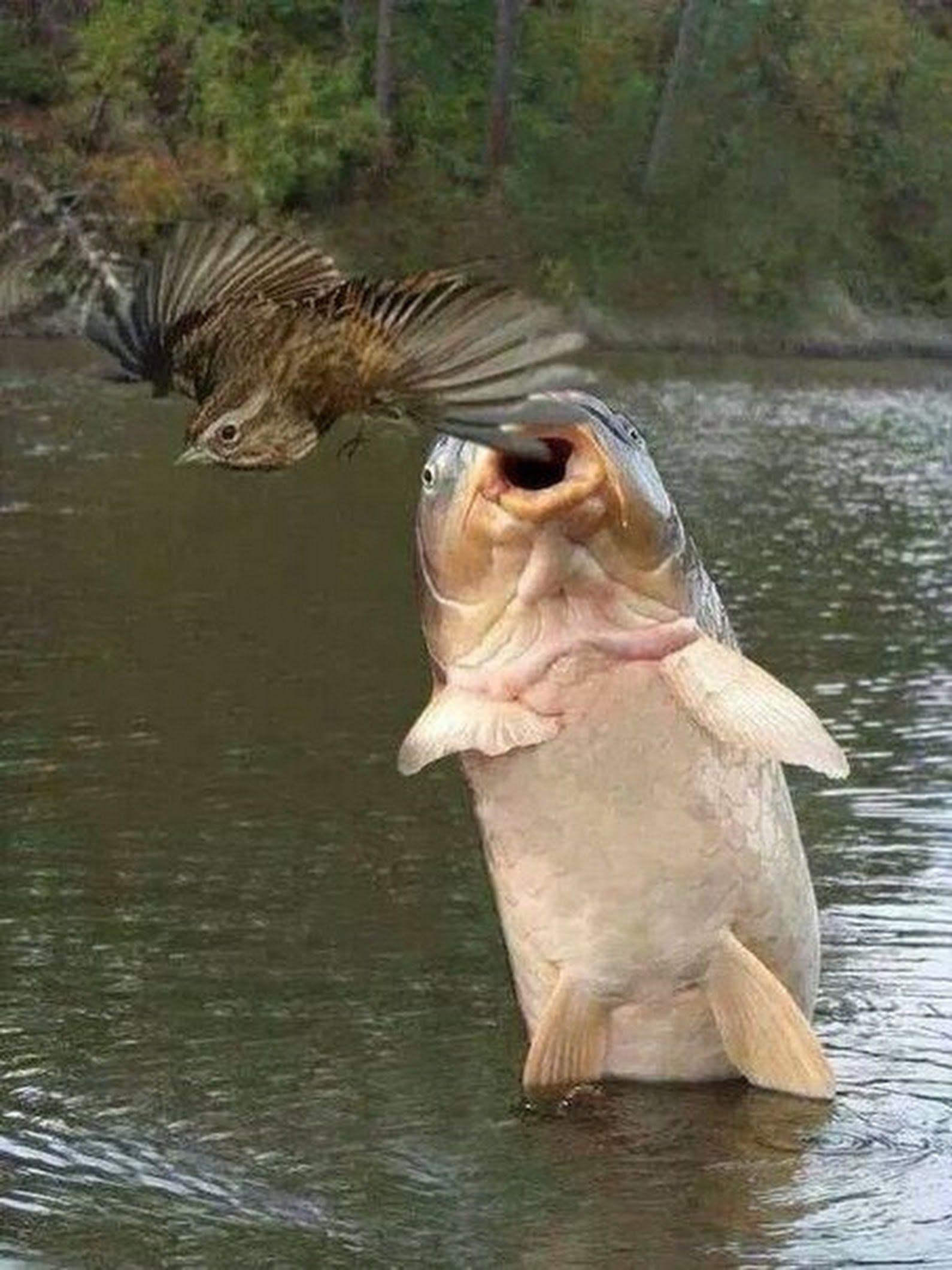 те, приколы фото с рыбой сбитое тело птицы