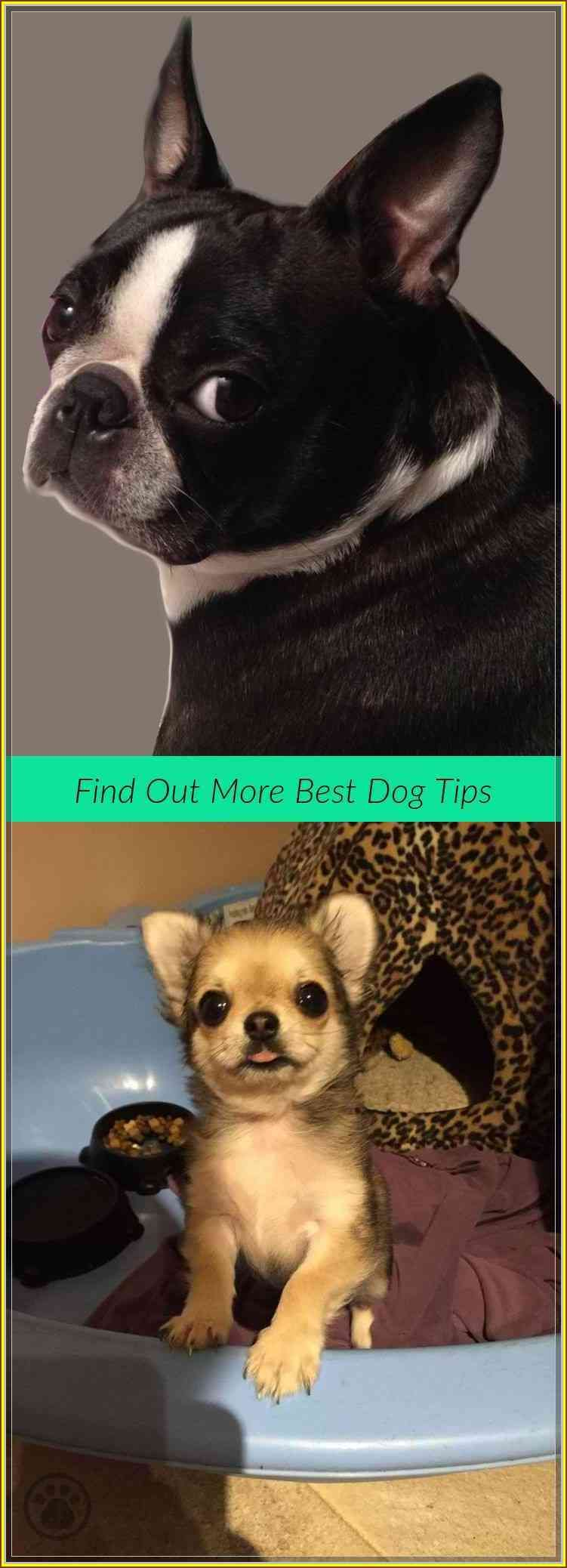 Tips You Should Know When Dealing With Dogs Dog care