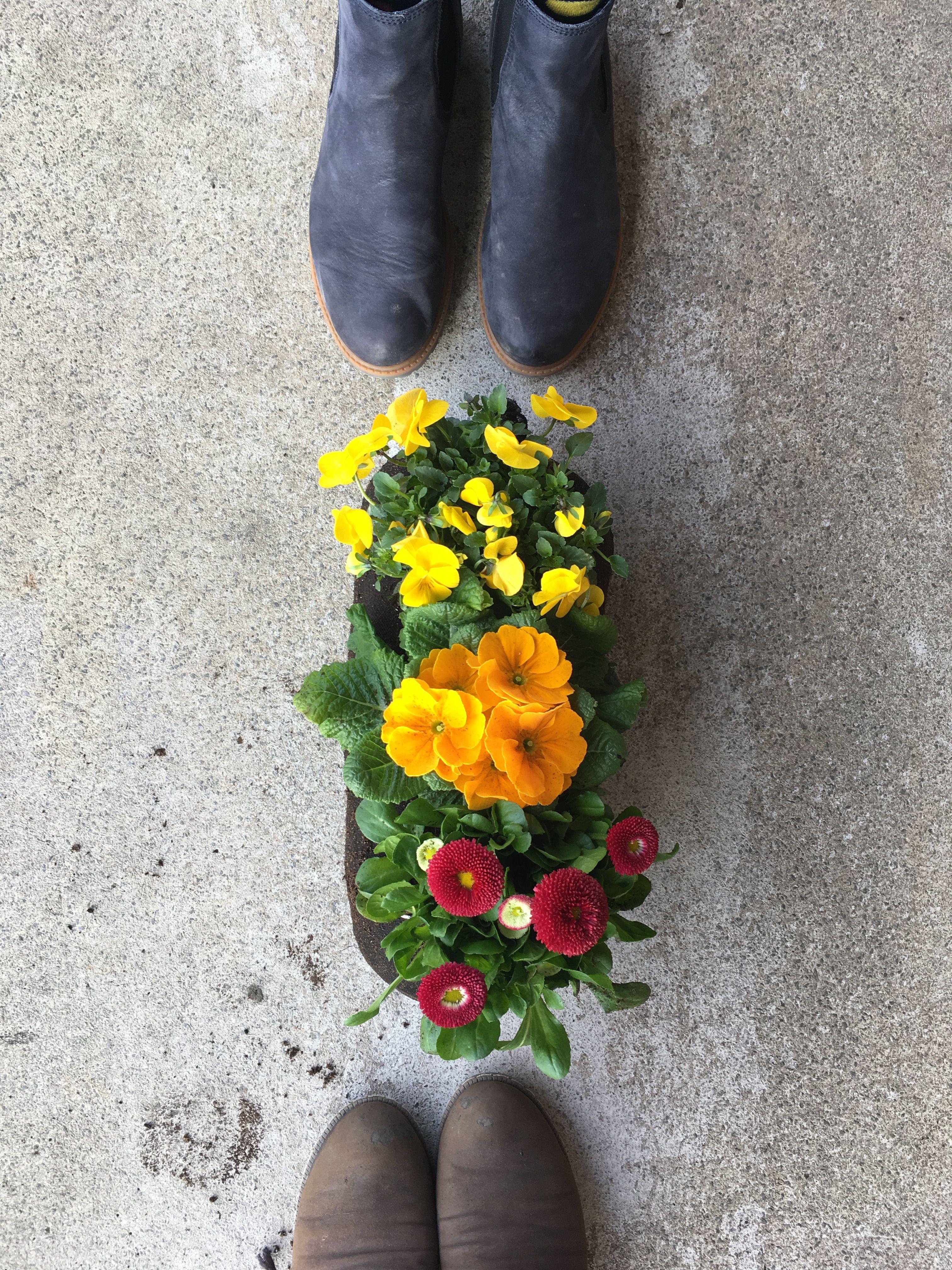 Fruhlingsblumen Fruhlingsblumen Blumen Und Fruhling