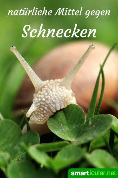 Mit Diesen Tricks Meiden Schnecken Deine Gemusebeete Schnecken Im Garten Garten Und Schadlinge Im Garten