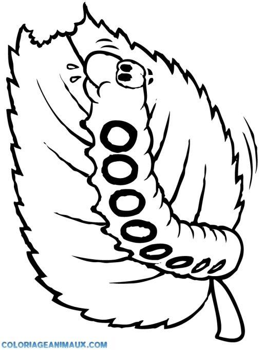Coloriage chenille de papillon qui mange pour enfants - Dessin de chenille ...
