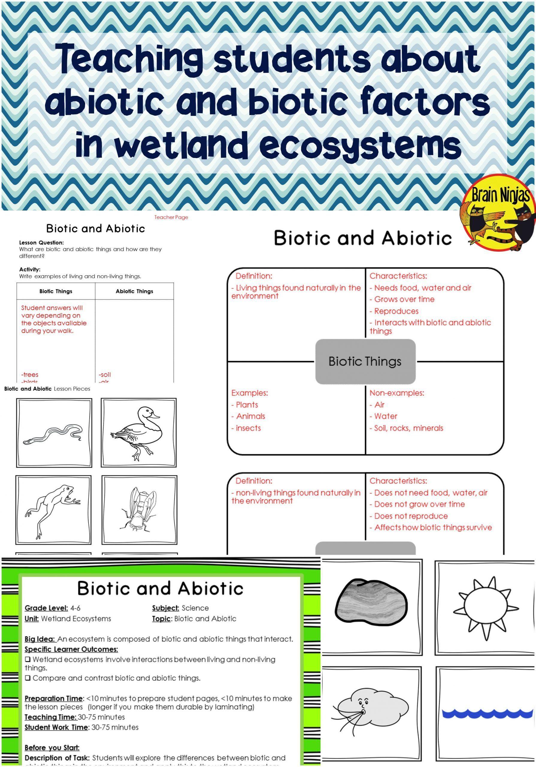 5th Grade Ecosystem Worksheets Wetlands Biotic And Abiotic