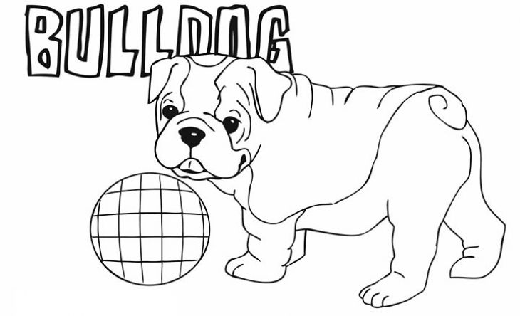Cute Little American Bulldog Puppy Coloring Page For Kindergarten