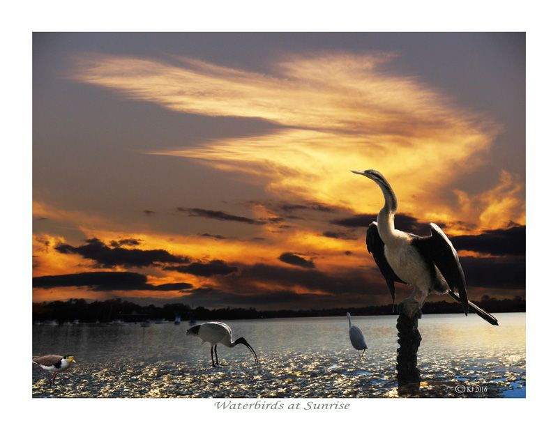 WATERBIRDS AT SUNRISE - (prints available) bird photography, nature photography, skies, sunrise, sunsets, wildlife photography, bird photos, sky photos