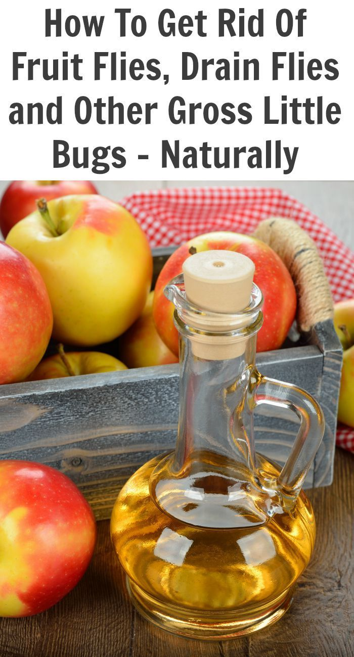 Natural insect repellent for fruit flies drain flies and other