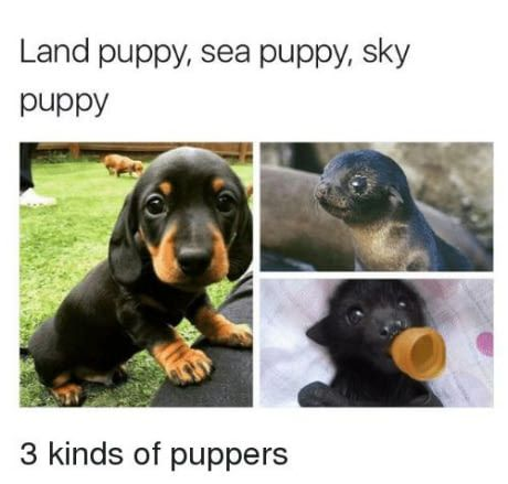 I love all puppers!