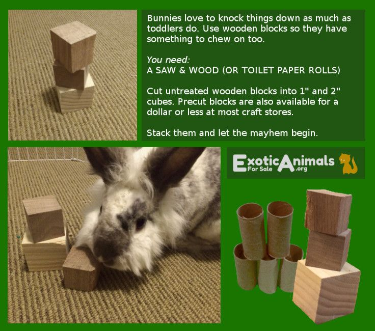 diy rabbit toys youtube