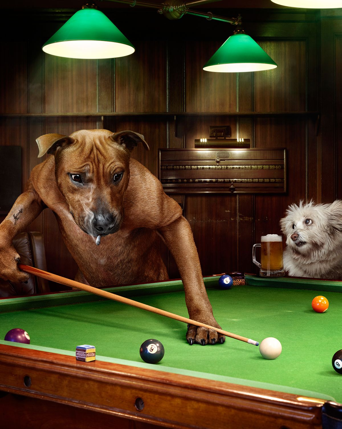 Sydney Cats & Dogs Home on Behance Perros jugando