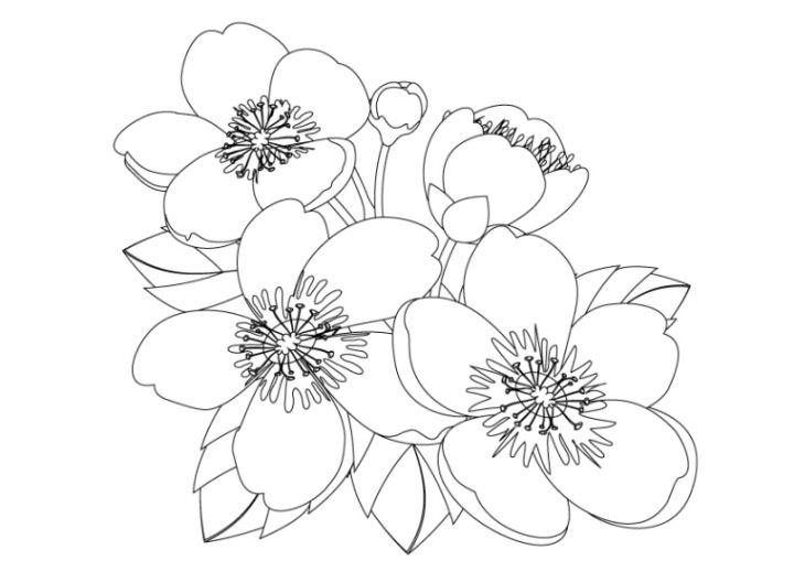 Kirschbluten Malvorlagen Malvorlage Kirschblte Malvorlagencr Ideen