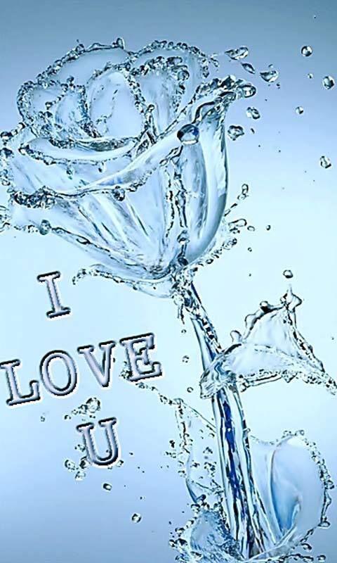 Valentine S Day I Love You Water Rose Kertas Dinding Gambar Inspirasi