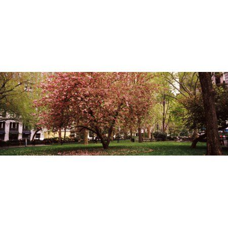 Cherry blossom in a park Madison Square Park Manhattan New York City New York State USA Canvas Art - Panoramic Images (36 x 12)