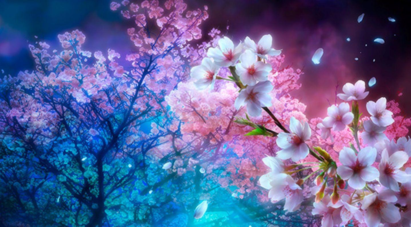 Top Wallpaper Night Cherry Blossom - e20121df705e2a76a25984c1af814544  Collection.jpg