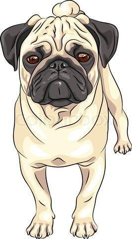 Grafiken von \'Farbe Skizze nettes ernstes Hund fawn Mops Rasse ...