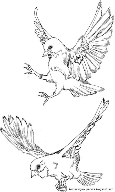 Flying Bird Drawing Free Download Clip Art Free Clip Art On Flying Bird Drawing Bird Drawings Fly Drawing