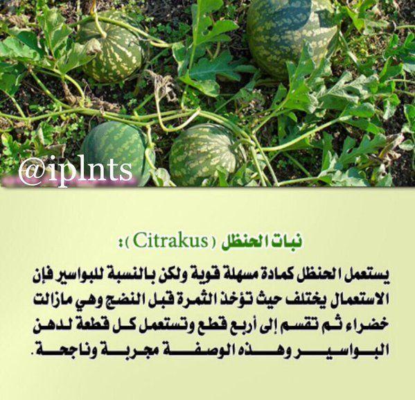 عالم النباتات Iplnts Plants Green Green Beans