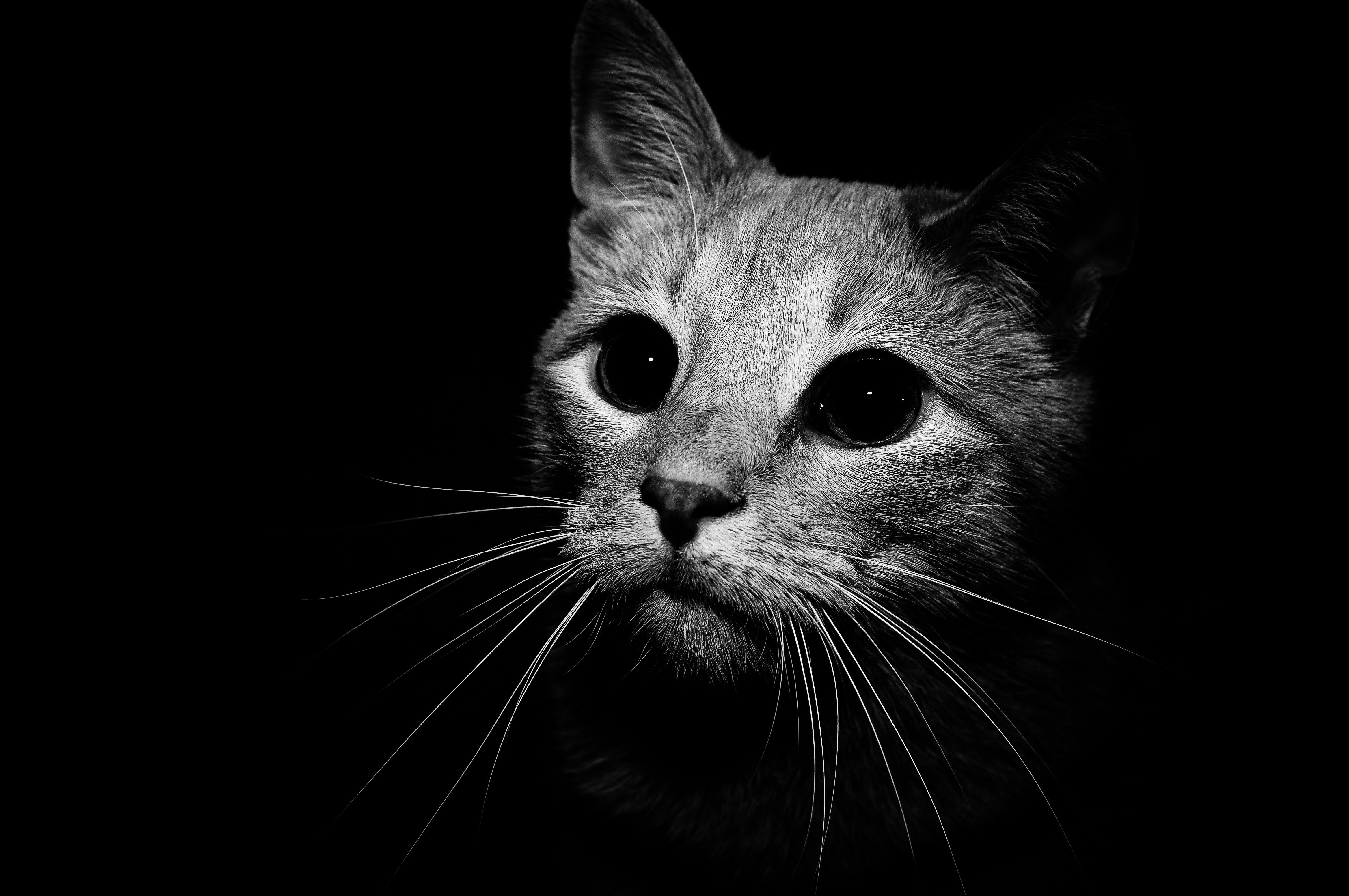 Cat In Black And White Res 4672x3104 / Size1717kb. Views