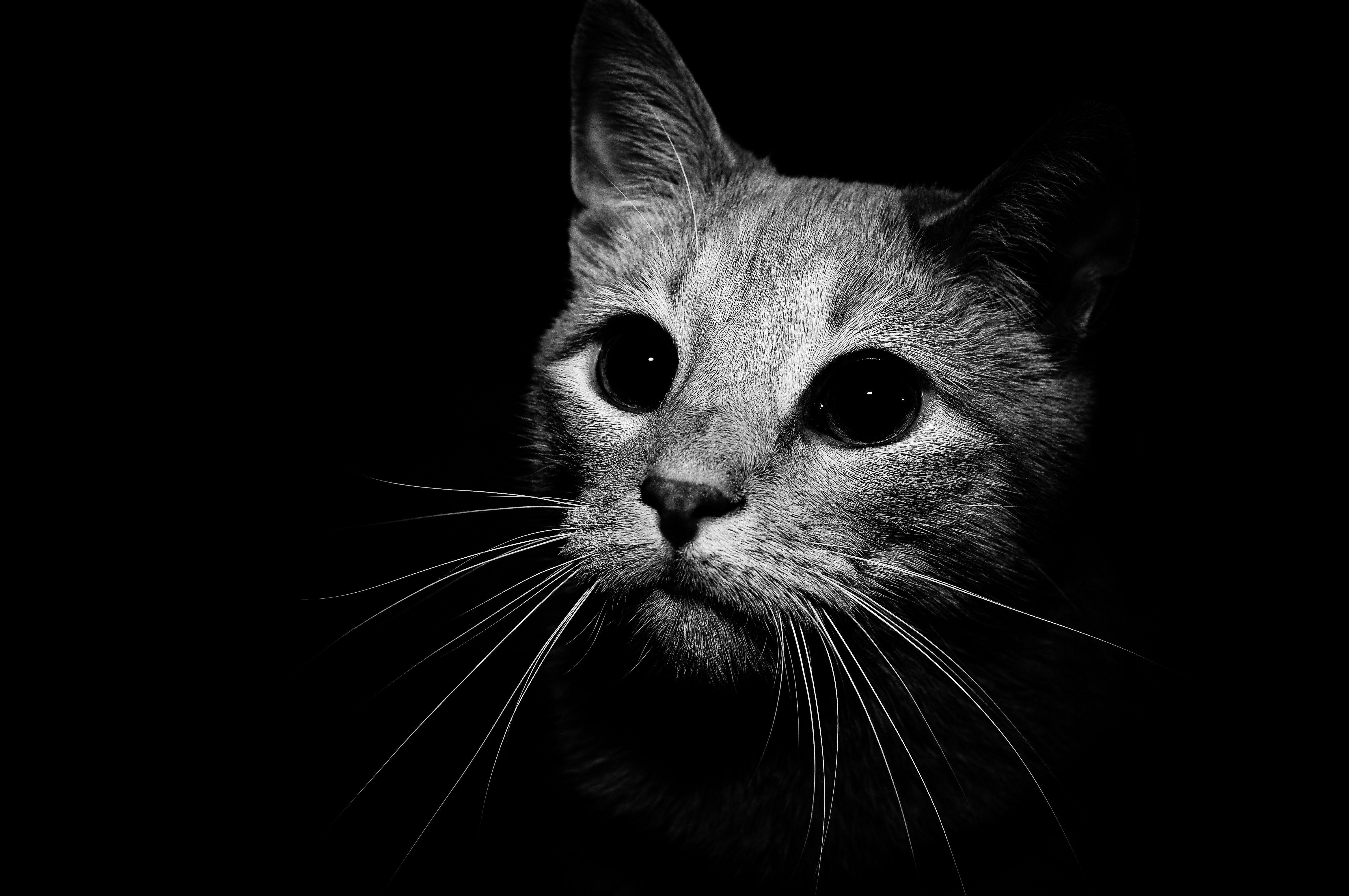 Black White Wallpapers Cats Pet Birds Cat Wallpaper