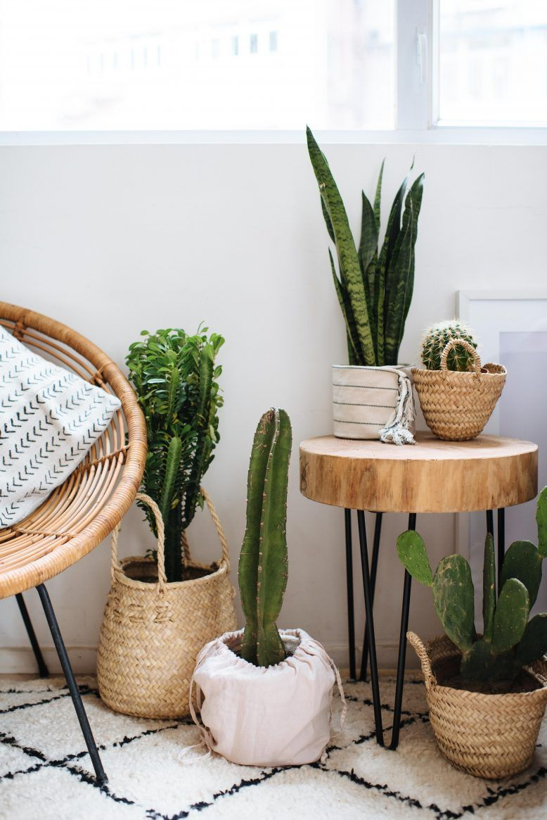 3 Easy Planter Ideas (When You're Too Lazy To Repot!) | Collective Gen