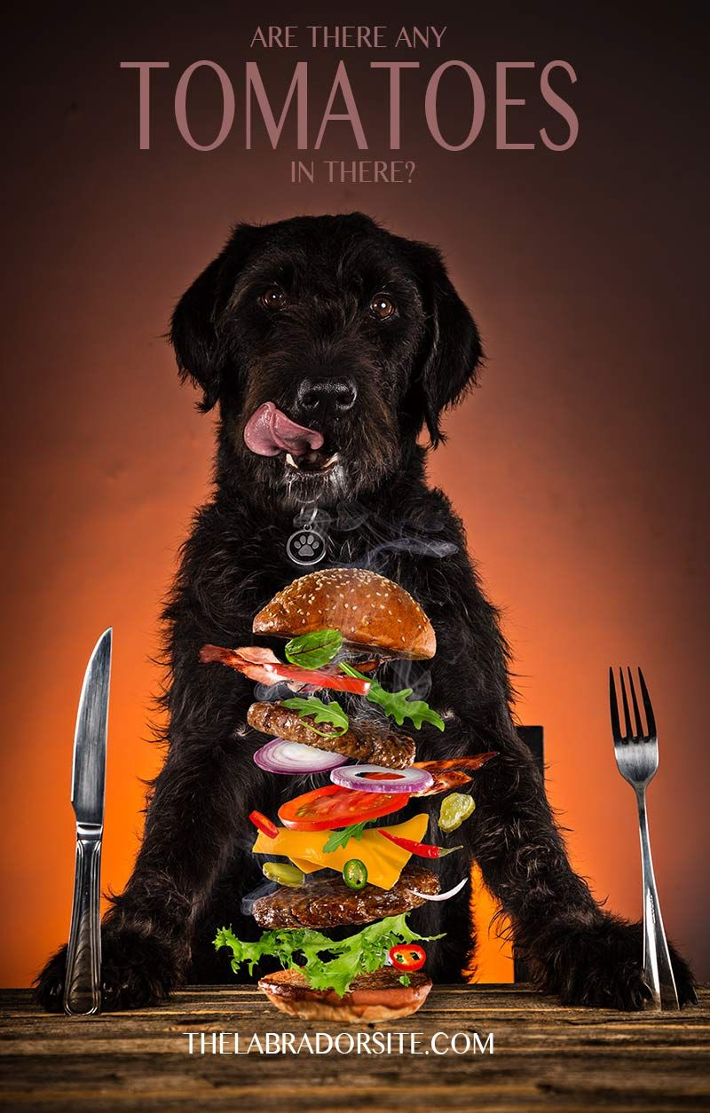 Can dogs eat tomatoes, Raw feeding