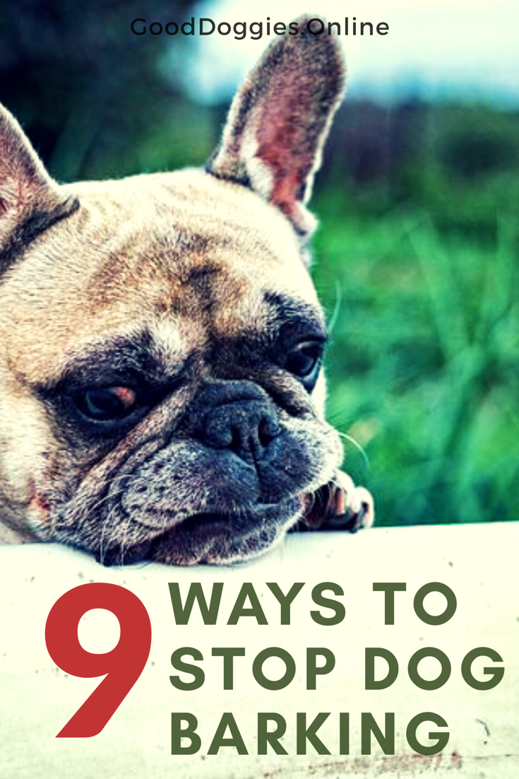 Check Out These Dog Training Tips On How To Stop Barking Whether It S When